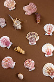sea shells on a brown background