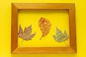 autumn leaves in a golden frame isolated on bright yellow background