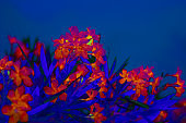 tropical flowers in neon light abstract tropical summer background