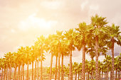 palm trees toned  yellow sunshine backlight