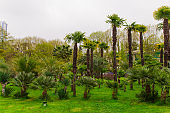 palm tress forest in a city park