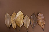 brown leaves on a brown background