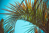palm leaves summer tropical abstract natural backdrop
