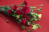 carnation flowers on a vibrant red background