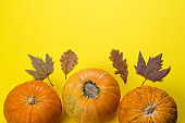 pumpkins and maple leaves on a yellow background with  copy space
