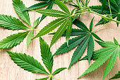 marijuana green leaves on a wooden background