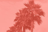 palm trees toned