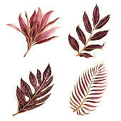 Set of tropical plants. Botanical watercolor red exotic leaves with gold outline.