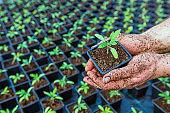 Hand holding green seedling