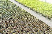 Potted seedlings growing in a plant nursery