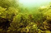 Underwater Freshwater Flora Rivers, Lakes, Pond,  Underwater Flora