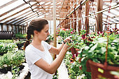 Young woman florist work in garden. Female agronomist working with colorful flowers in greenhouse
