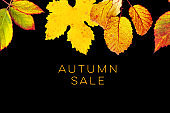 Autumn Sale, a banner with yellow autumn leaves and a place for text