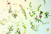 The herbs of Provence. Rosemary, oregano, thyme, and marjoram, shot from the top on a background of dry leaves and petals, toned image