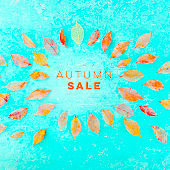 Autum Sale. Discount banner or flyer square design template with vibrant autumn leaves and a place for text on a teal blue background