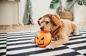 Costumed for Halloween