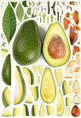 Avocado Collection Abstract
