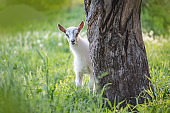Little kid goat on  warm spring day. Childhood goats on farm