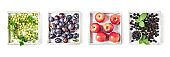 Fruits and berries on white wooden tray set