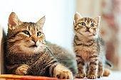 Little kitten with mom. Tabby cat baby