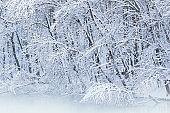 Snow Flocked Shoreline Kalamazoo River