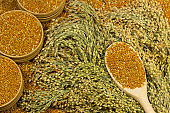 Sprigs of red millet. Grains of millet in a wooden spoon and box, close-up