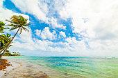 Wood Jolan beach in Guadeloupe