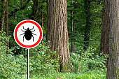 Ticks sign in the wild green forest.