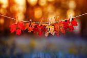 concept with a banner with the word autumn carved on red maple leaves hanging from clothespins and rope in the autumn sunshine Park