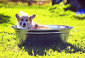 funny red puppy with foam on his head washes in a large metal trough in the yard in the village in the grass on a Sunny warm day