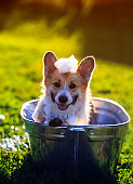 funny puppy dog standing in a metal t, is cooled, washed on the street in the summer on a hot Sunny day with shiny soap bubbles and foam