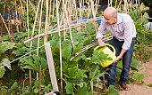 Man watering plants in greenhouse
