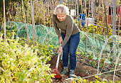 Mature woman gardening with hoe