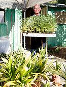Senior gardener with seedlings