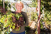 Mature woman taking armful of lettuce