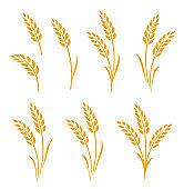 hand drawn set of wheat ears