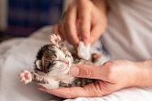 Woman stimulating kitten bowel movements
