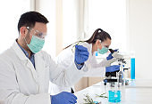 Engineers working with sprouts in laboratory