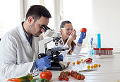 Engineers working with vegetables in laboratory