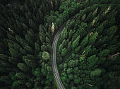 winding road in the forest on north america