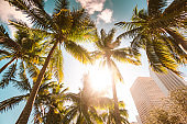 miami downtown brickell district with palm trees