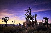 stars in the sky at joshua tree national park