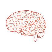 Outline vector brain on white background.