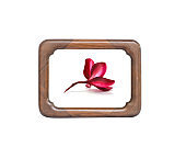 Wooden frame with red flower isolated on white background