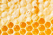 Honeycomb with honey