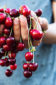 man with freshly collected cherries in his hands