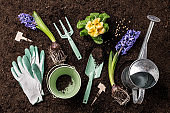 Spring garden works. Gardening tools and flowers on soil background.