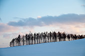 Winter sunset hills and larch forest