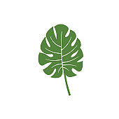 monstera leaf vector element icon. monstera leaves vector decoration