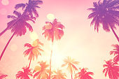 Summer vacation and nature travel adventure concept. Tropical palm tree with colorful bokeh sun light on sunset sky cloud abstract background.